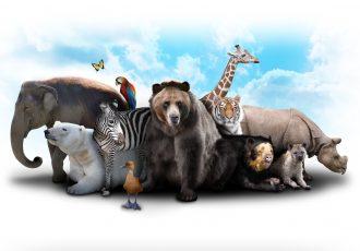 狂暴な野生動物達