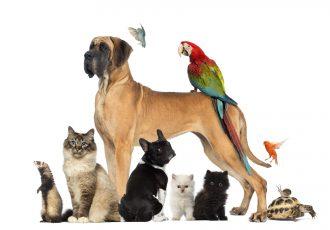 犬、猫、鳥、ウサギ