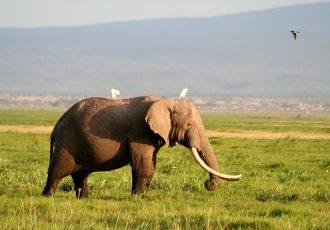 アフリカのサバンナにいる象