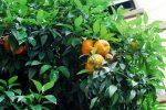 Giardino degli Aranci