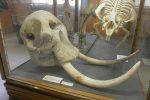 Museo Civico di Storia Natural de Milano