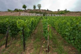 Rheingauer Weinmuseum Bromserburg