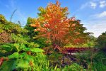 Royal Botanic Garden Edinburgh