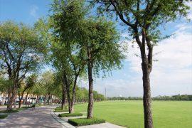 Sanam Luang Park