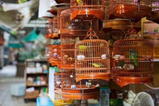バードガーデンの周囲にある、鳥屋さんの様子。