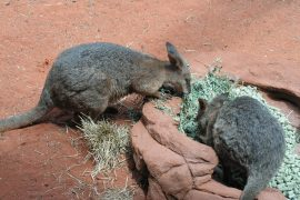 Sydney WildlifeWorld