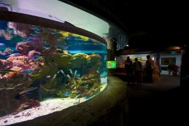 slick_Manly Sea Life Sanctuary