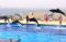 マリンワールド海の中道のイルカショー