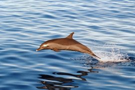 gua-dolphin-watching