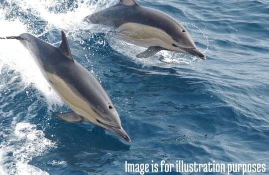 haw-dolphin-watching
