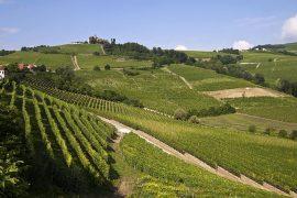 ピエモンテのブドウ園景観