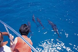 gua-dolphin-watching