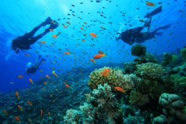 haw-scuba-diving