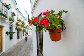 flower path of Cordoba