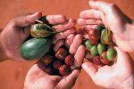 ブッシュタッカーとは、アボリジニが食べてきたオーストラリア原産の動植物料理の総称