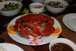 マングローブ蟹は熱帯地方のマングローブ周辺に棲息している蟹