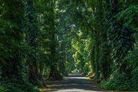 ボゴール植物園の森林