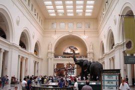 フィールド自然史博物館の館内