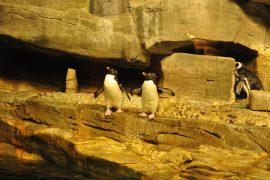 シェッド水族館のペンギン